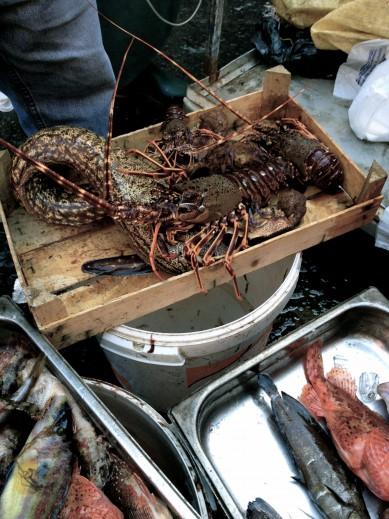 Catania_fish_market8