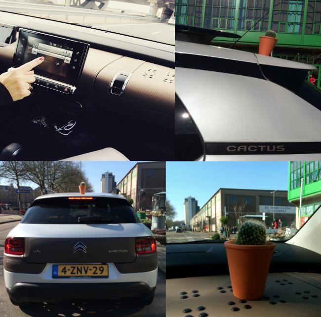 Rotterdam_CactusC4
