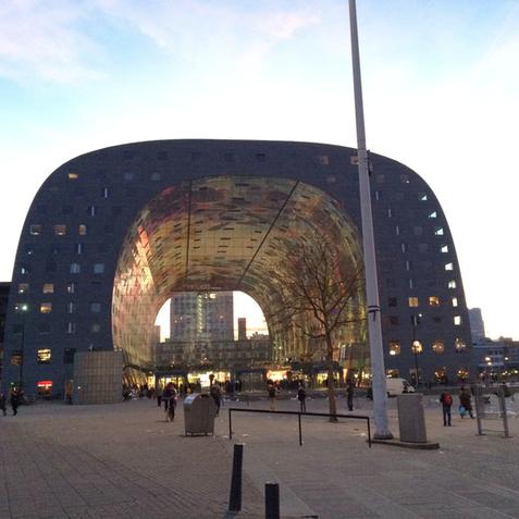 Rotterdam_cactus4
