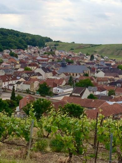 PH_vineyards